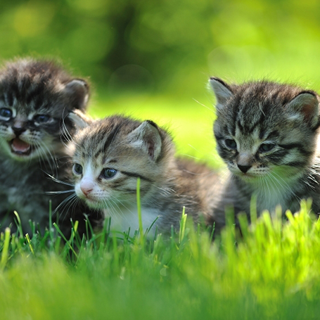 Syosset Animal Hospital - Kitten Care